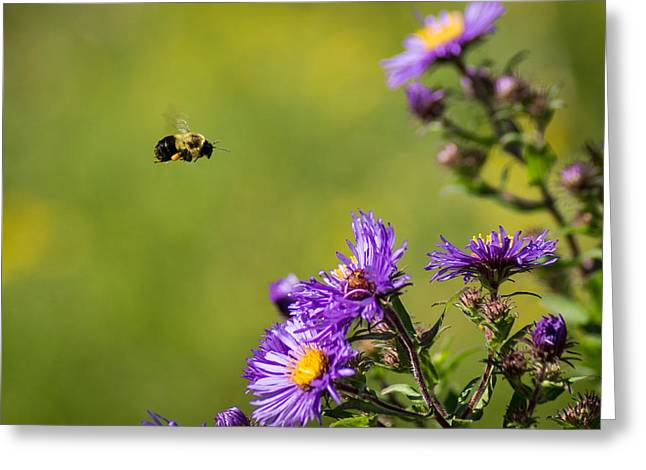 Wisconsin Wildflowers Greeting Cards - On a Mission Greeting Card by Bill Pevlor