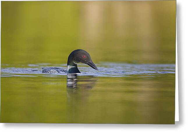 On Glassy Waters Greeting Card by Tim Grams