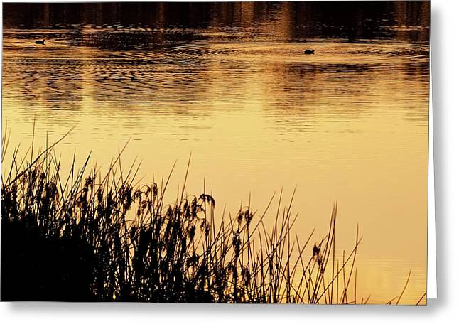 Alcoa Greeting Cards - On Golden Pond Greeting Card by Heather Thorning