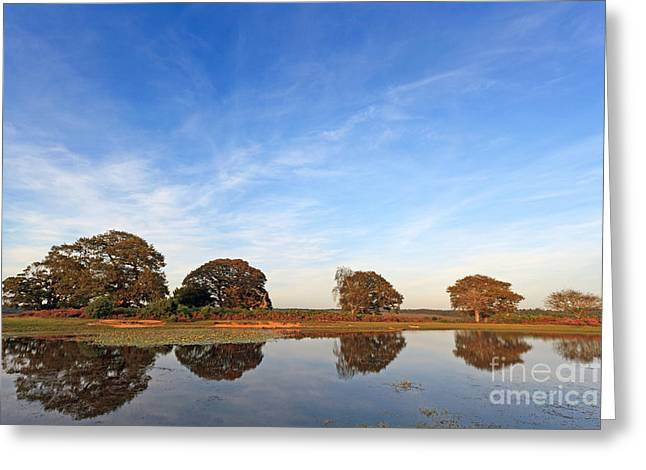 New Britain Greeting Cards - On golden pond Greeting Card by Richard Thomas