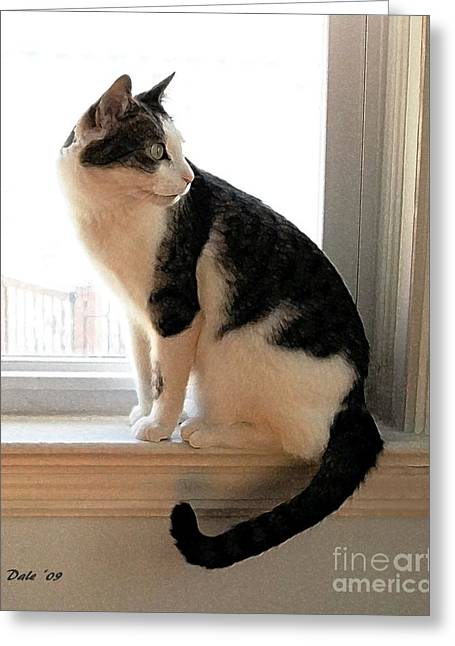 Photos Of Cats Greeting Cards - On the Alert Greeting Card by Dale   Ford