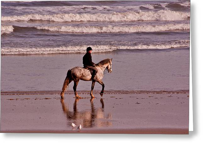 Sea Horse Greeting Cards - On The Beach Greeting Card by Trevor Kersley