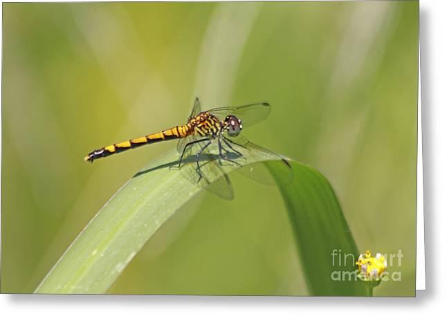 Damsel Fly Greeting Cards - On The Blade Greeting Card by Deborah Benoit