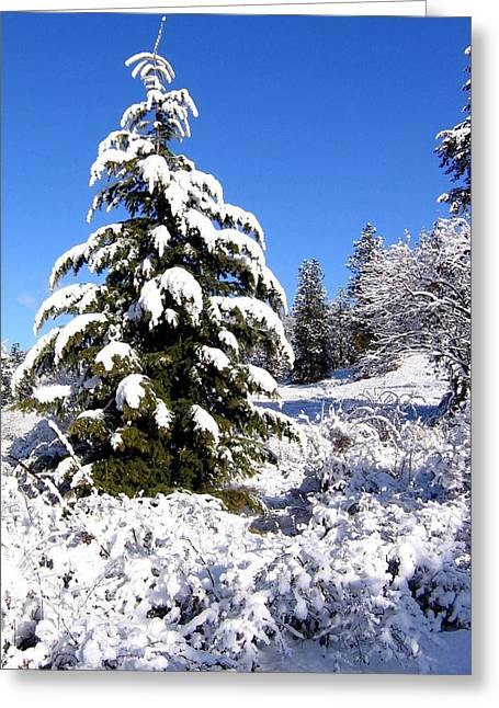 Fir Trees Greeting Cards - On The Bright Side Greeting Card by Will Borden