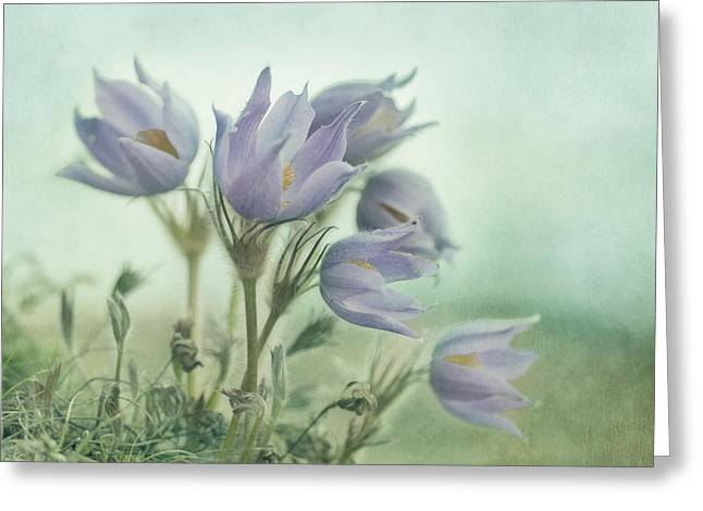 Vulgaris Greeting Cards - On The Crocus Bluff Greeting Card by Priska Wettstein