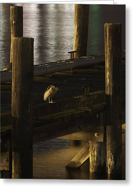Frank Pietlock Greeting Cards - On The Dock Greeting Card by Frank Pietlock