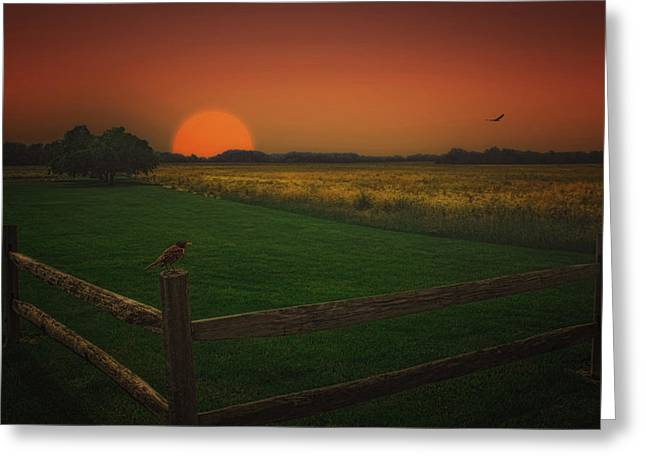 Landscape Posters Greeting Cards - On The Fence Greeting Card by Tom York Images