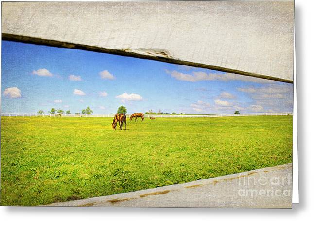Kentucky Horse Park Photographs Greeting Cards - On the other Side Greeting Card by Darren Fisher