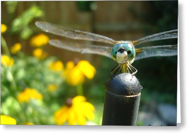 Macro Dragonfly Picture Greeting Cards - On the Post Greeting Card by Jen Sparks