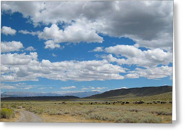On The Range Greeting Card by Kirk Williams