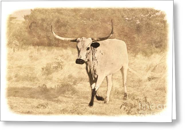 Texas Longhorn Cow Greeting Cards - On The Run Greeting Card by Betty LaRue