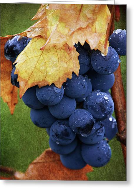 Grape Vine Greeting Cards - On The Vine Greeting Card by Dale Kincaid
