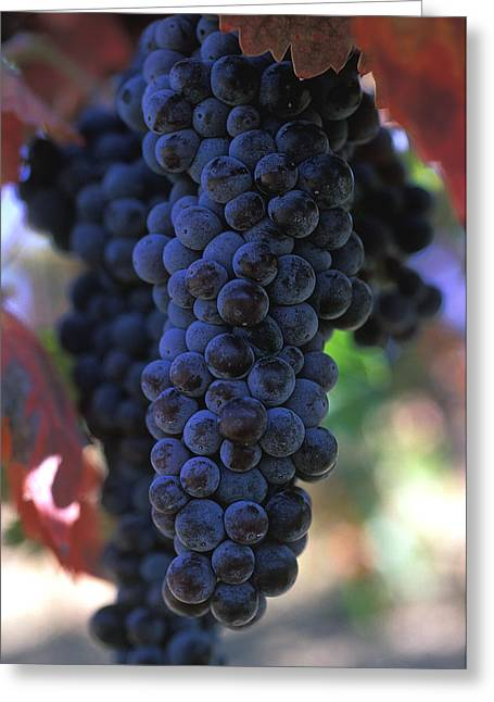 Grape Print Greeting Cards - On the Vine Greeting Card by Kathy Yates