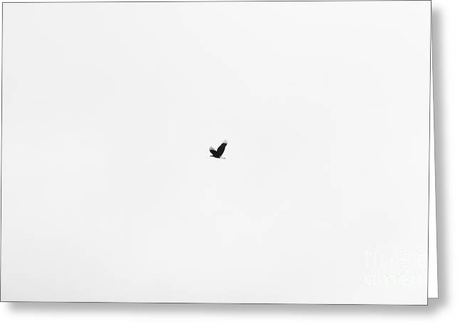 On The Wings Of A Eagle Silhoette Greeting Card by Daniel Henning