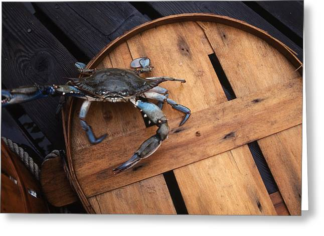 Bushel Basket Greeting Cards - One Angry Crab Greeting Card by Skip Willits