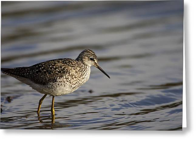 Worn In Greeting Cards - One Bird Wading In Water Greeting Card by Richard Wear