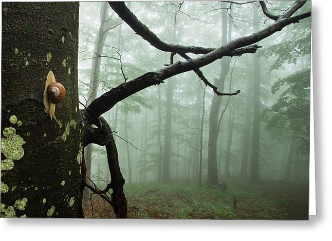 Reserve Photographs Greeting Cards - One day of the snails life Greeting Card by Evgeni Dinev