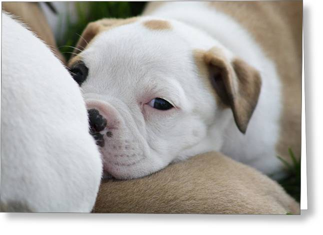 Puppies Photographs Greeting Cards - One Eye Open Greeting Card by Anastasia Smith