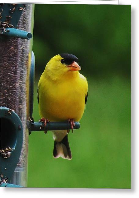 One Finch Greeting Card by Vijay Sharon Govender