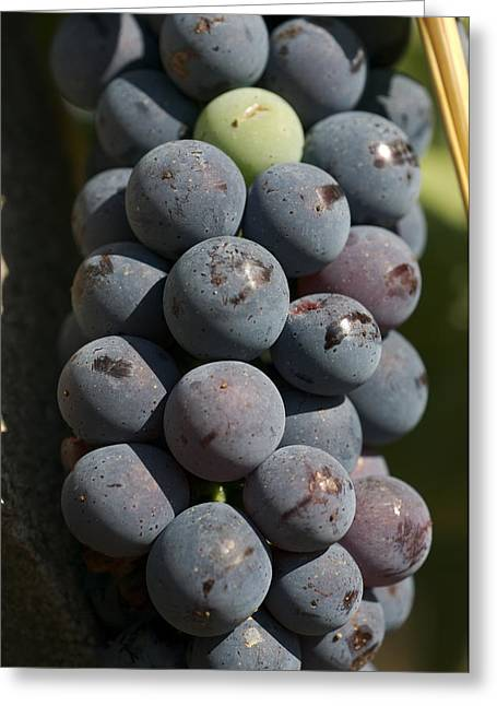 One Green Grape Stands Out In A Bunch Greeting Card by Heather Perry