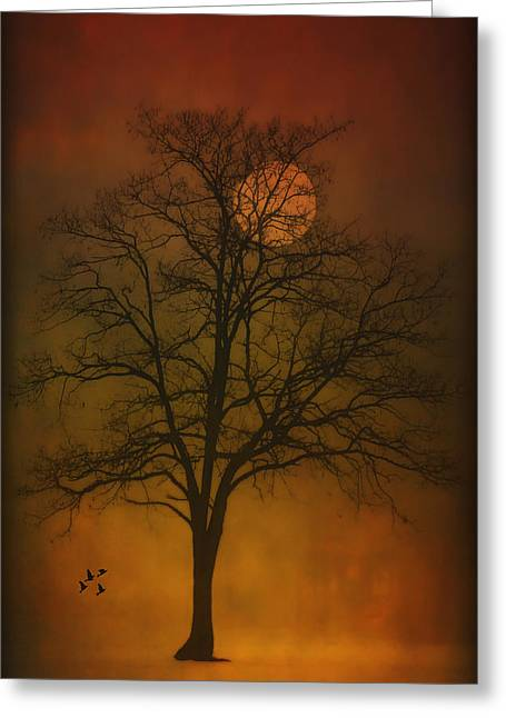 Sundown Framed Prints Greeting Cards - One Lonely Tree Greeting Card by Tom York Images