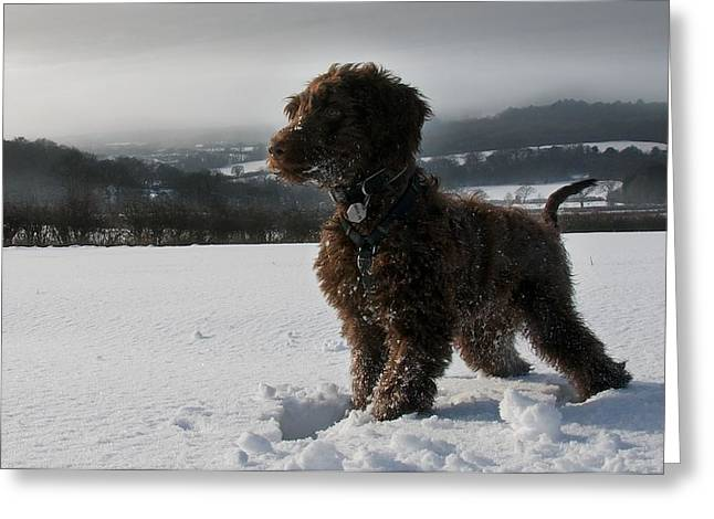 Dog In Snow Greeting Cards - One Proud Dog Greeting Card by Daniel Smith