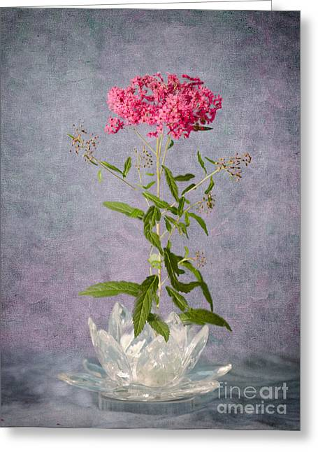 Spirea Greeting Cards - One Stem Greeting Card by Betty LaRue