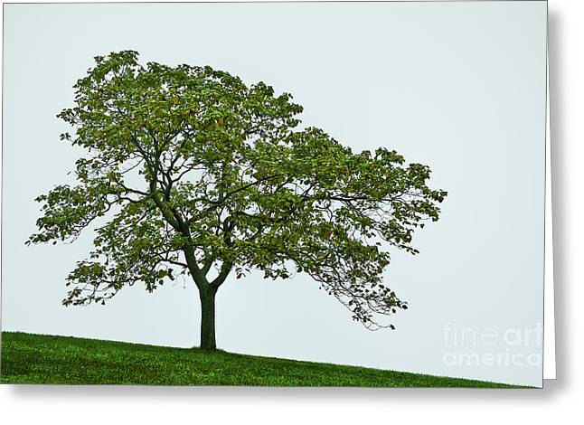 Muted Greeting Cards - One Tree Hill. Greeting Card by John Greim