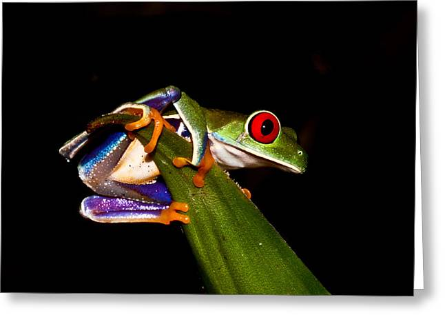 Tree Frog Greeting Cards - One Two Three Jump Greeting Card by Tom and Pat Cory