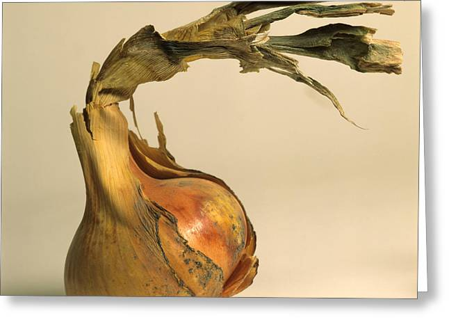 Alliums Greeting Cards - Onion Greeting Card by Bernard Jaubert