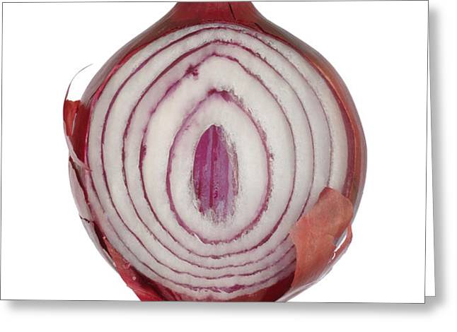 Onion Greeting Card by Frank Tschakert