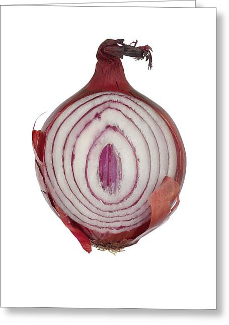 Culinary Greeting Cards - Onion Greeting Card by Frank Tschakert