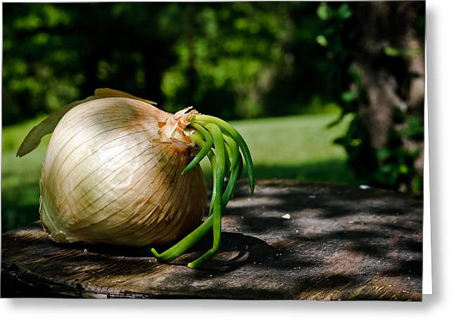 Onion In The Sun Greeting Card by Lori Coleman