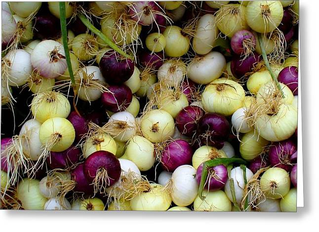 Farmstand Greeting Cards - Onions Tri Color Greeting Card by Brenda Pressnall