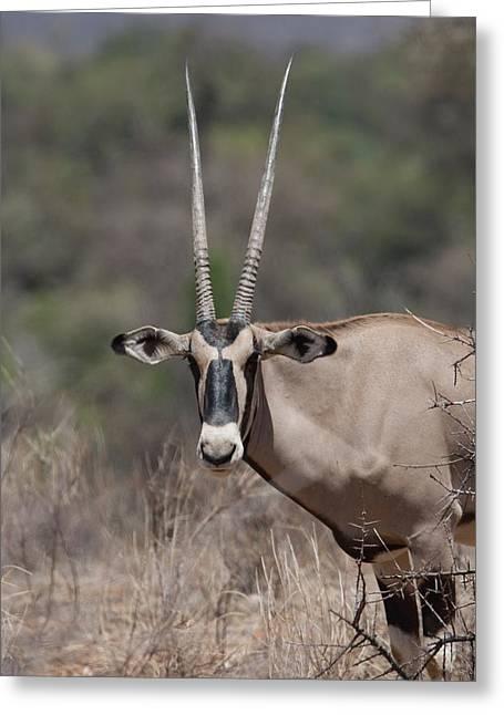 Onyx Greeting Cards - Onyx, Kenya, Africa Greeting Card by Keith Levit