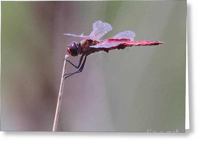 Dragonflies Greeting Cards - Open Mic Night At The Swamp Greeting Card by Robert Frederick