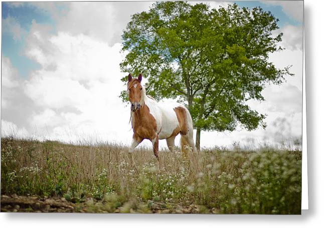 Tori Lawrence Greeting Cards - Open Range Greeting Card by Victoria Lawrence