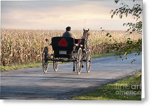 Horse And Buggy Greeting Cards - Open Road Open Buggy Greeting Card by David Arment
