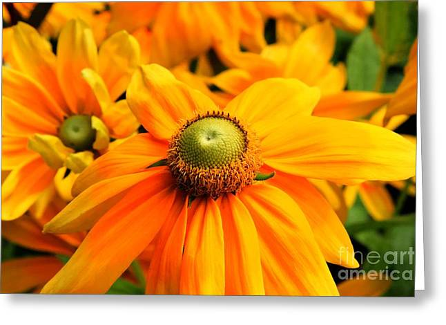 Tap On Photo Greeting Cards - Open Up Sunshine Greeting Card by Tap  On Photo