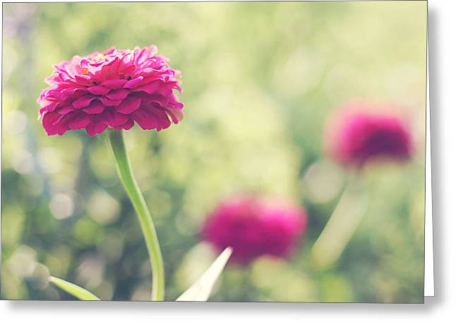 Pink Flower Prints Photographs Greeting Cards - Ophelia Greeting Card by Amy Tyler