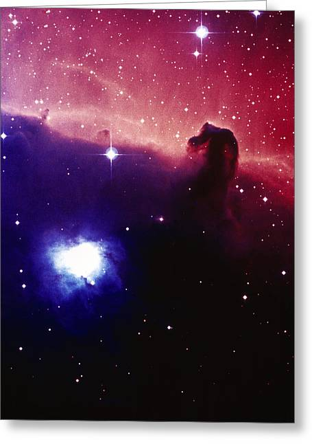 Horsehead Greeting Cards - Optical Image Of The Horsehead Nebula In Orion Greeting Card by Celestial Image Co.