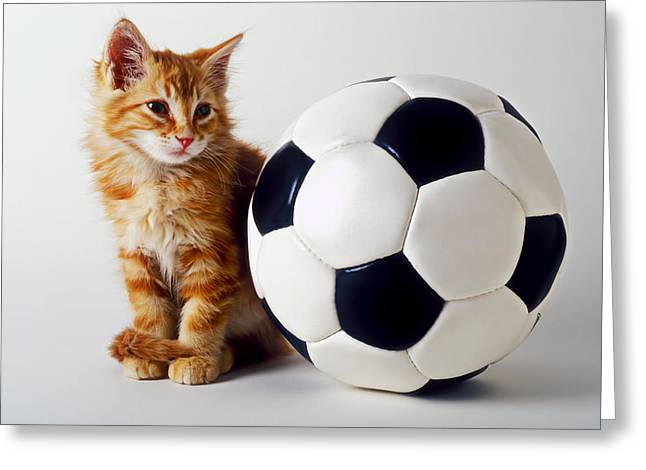 Domestic Pets Greeting Cards - Orange and white kitten with soccor ball Greeting Card by Garry Gay