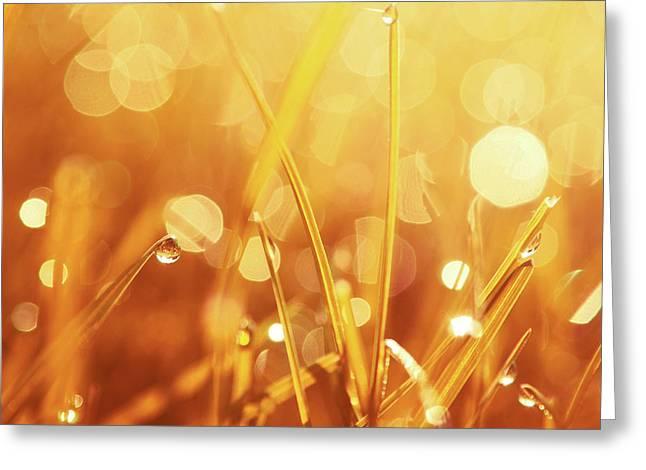Aimelle Prints Photographs Greeting Cards - Orange Awakening Greeting Card by Aimelle