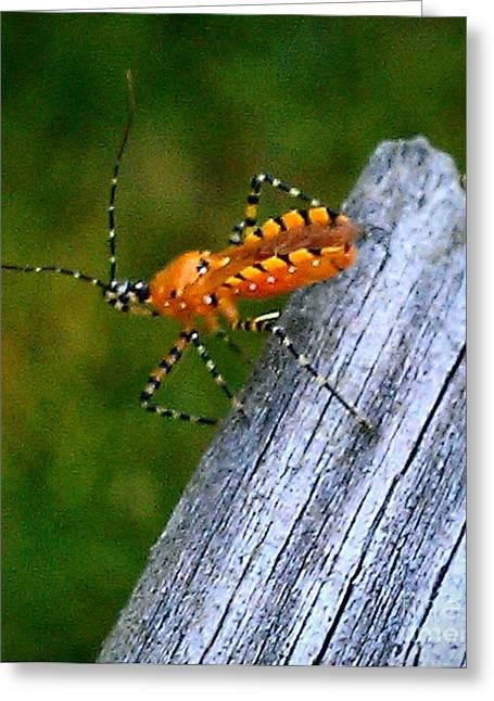 Nick Greeting Cards - Orange Bug 2 Greeting Card by Nick