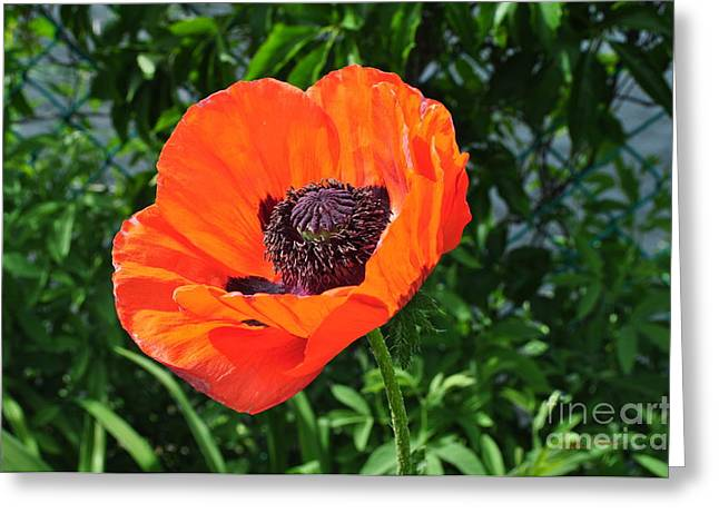 Occasion Greeting Cards - Orange Burst Greeting Card by Luke Moore
