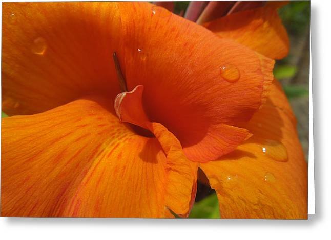 Orange Canna Greeting Card by Peg Toliver