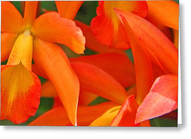 Becky Greeting Cards - Orange cattleya orchid Greeting Card by Becky Lodes