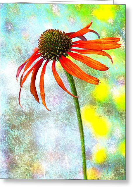Coneflower Greeting Cards - Orange Coneflower on Green and Yellow Greeting Card by Carol Leigh