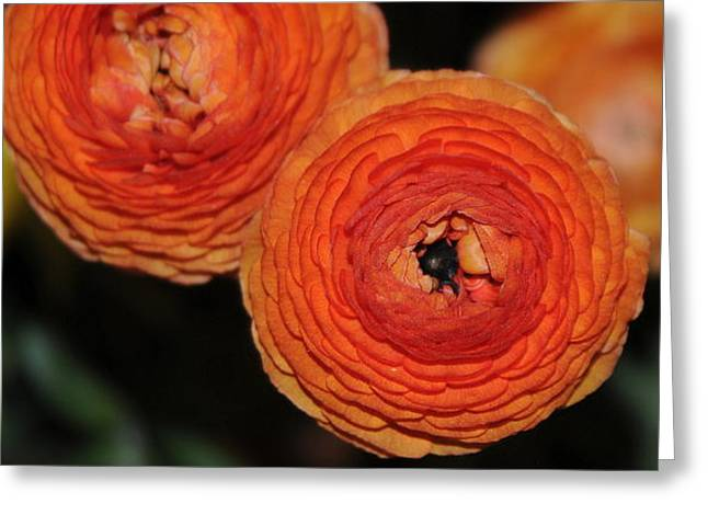 Orangr Greeting Cards - Orange Flowers Greeting Card by Patrick  Short