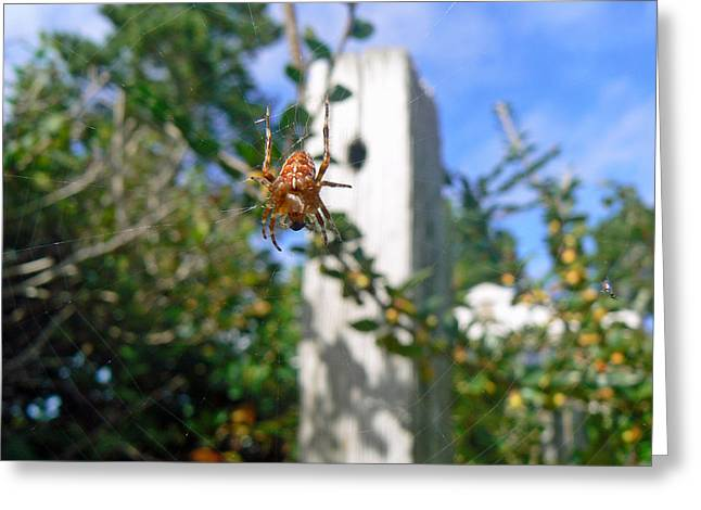 Spider And Fly Greeting Cards - Orange Garden Spider and Fly Greeting Card by Pamela Patch